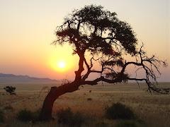 Mi viaje a Africa (La Ruta del Okavango) 01-09-2006