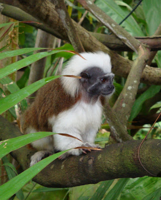 the zoo presents some fantastically cute modern day monkeys.