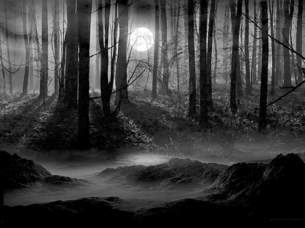 darkness forest