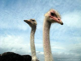 Les trucs de myrtille rencontrer des animaux sauvages for Parc animaux yvelines