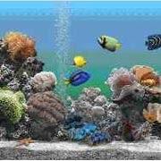 Reptiles y peces tipos de peces for Tipos de peces de agua fria