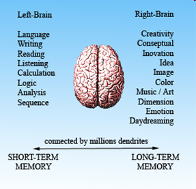 Improve Your Memory by Understanding the Functions of the Two Hemispheres
