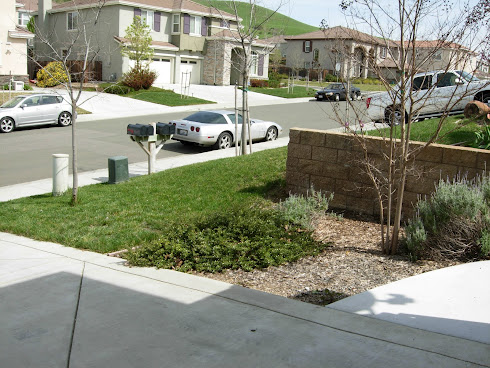 Front-yard Landscaping Before