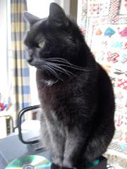 Mijn kat Figaro