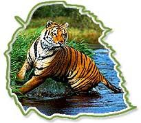 Essay Tigers