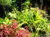 ARTICLE:  Confessions of an Organic Mulch Addict