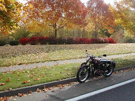 Autumn B31