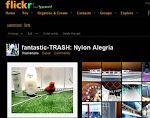 miceli en flickr