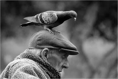 O velho sábio