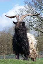 Goat Kult!!!666