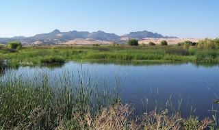 [Spring brood ponds in California]