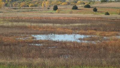 [Wetland basin at Shoemaker Marsh]