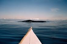 Jørn og grønlandshvalen
