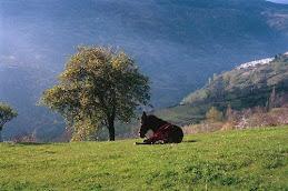 Ezel in Capileira