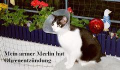 Merlin, mein Blogwächter