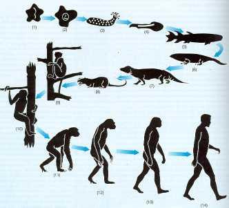 external image DARWIN+EVOLUCI%C3%93N.jpg