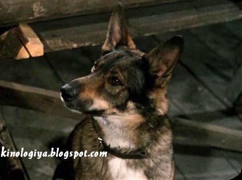 Фильм самогонщики собака jpg