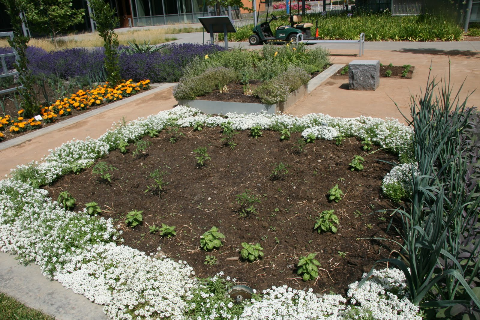 Uncategorized « UC Davis Good Life Garden