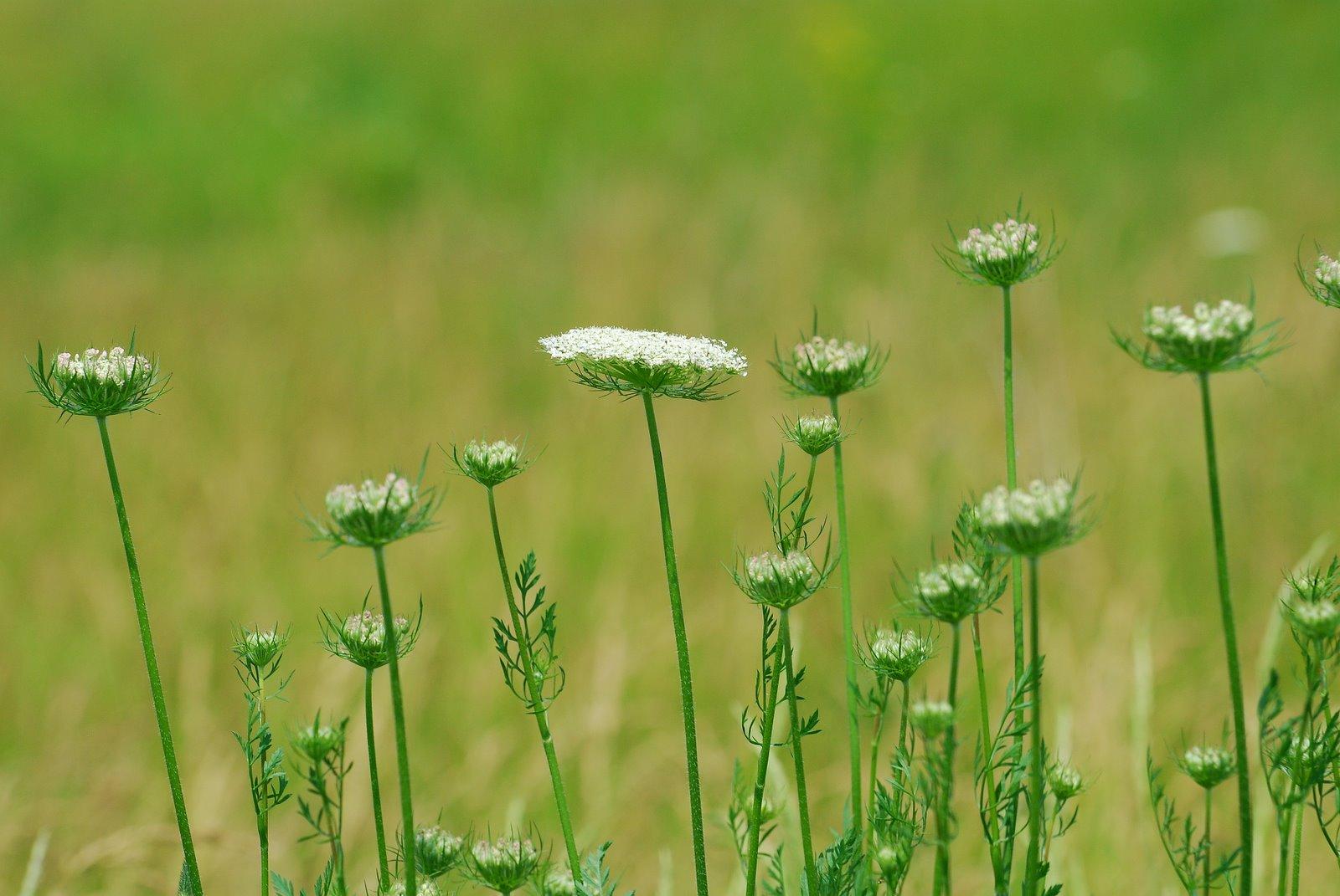 Nikon sniper tall grass decorations for Tall grass decor