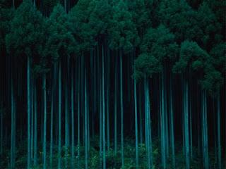 Forest & Art