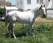 Cavalos em Venda