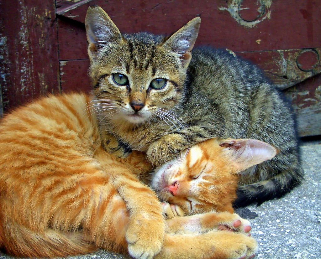 Forum on this topic: The big differences between cat people and , the-big-differences-between-cat-people-and/