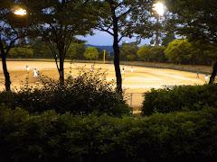 #1 sport in Japan