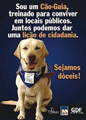 Cães Guia
