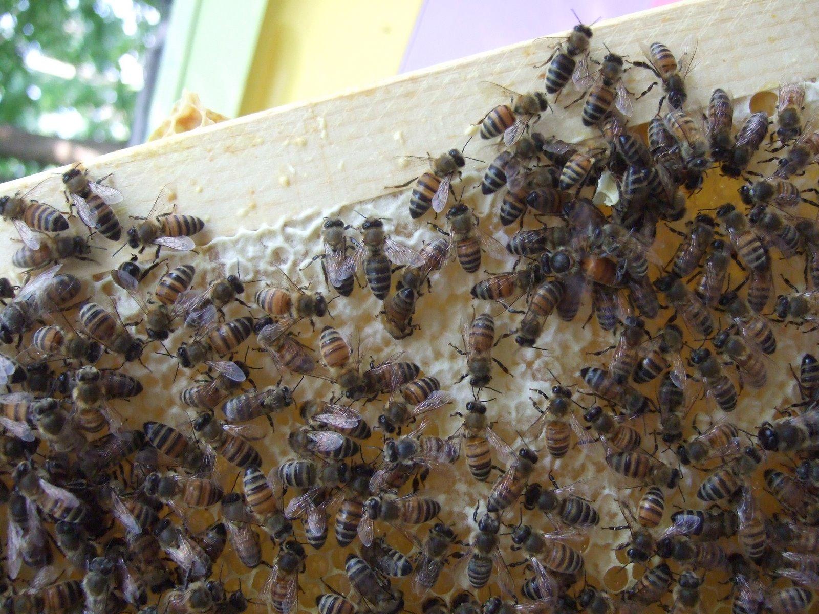[Hive]