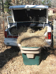 HAY FOR MY HORSE