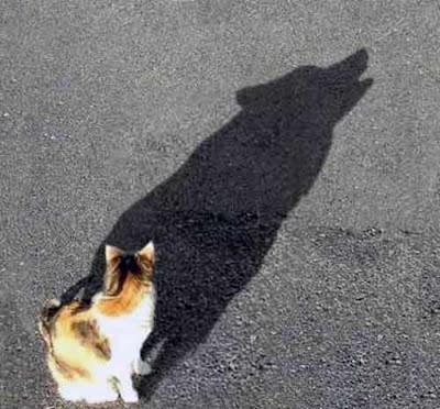 Fotos e Imágenes graciosas de gatos