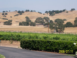 Central California Vineyard