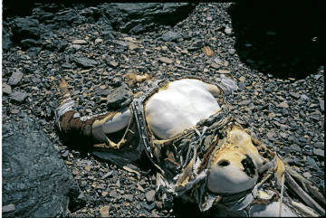 K2 Dead Bodies Page not found | The Doll Blog