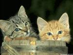 adoro gatos