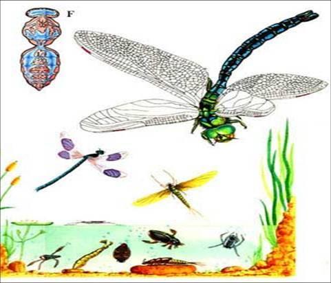 INSECTOR: diseccion de un insecto (omar torrealba)