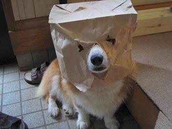 แฟนซีลูกหมา น่ารัก