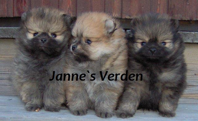 Janne`s Verden :)