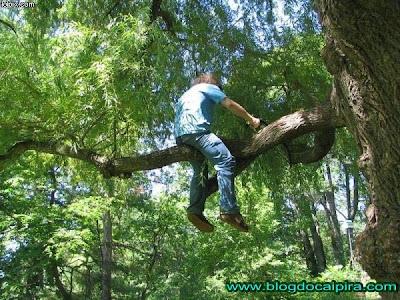 idiota podando árvore