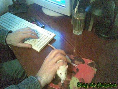 novo modelo de mouse