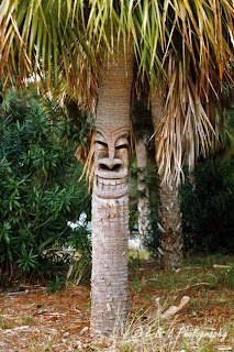 wtf tree, wtf, funny tree, funny pictures, tree, laughing tree, tree faces