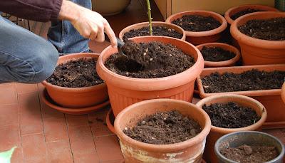 L 39 orto sul balcone e l 39 orto nel campo marzo 2008 for Vasi per semina
