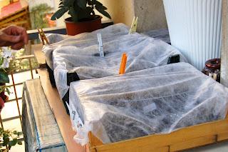 L\'orto sul balcone e l\'orto nel campo: Coltivare pomodori in vaso