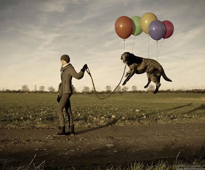 perro flotando con globos. CUIDADO con los HUEVOS. HUMOR