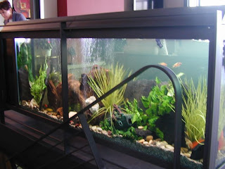 beautiful aquarium fish tank design