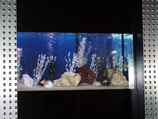 cool Fish tank