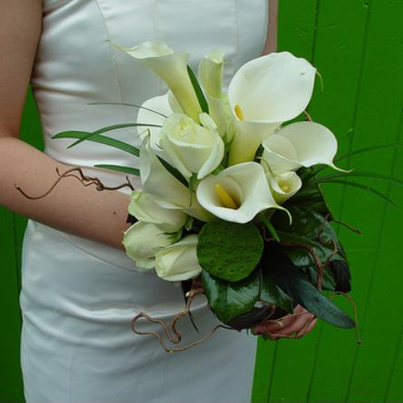 Premium flowers the meaning of different wedding flowers 2 for Calla lily flower meaning