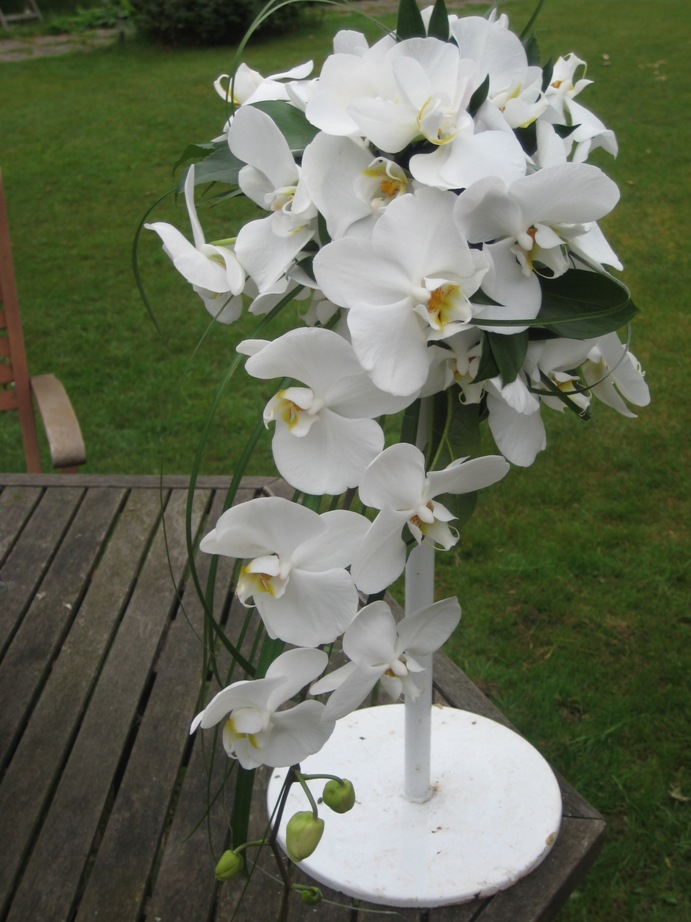 Wedding Bouquet Orchid Ideas : Premium flowers wedding themes orchid