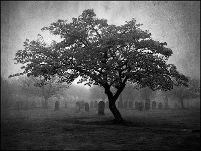black and white picture of tree over headstones