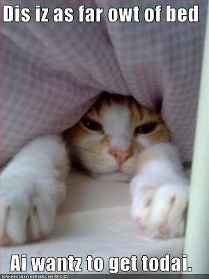 cat under covers doesn't want to get out of bed