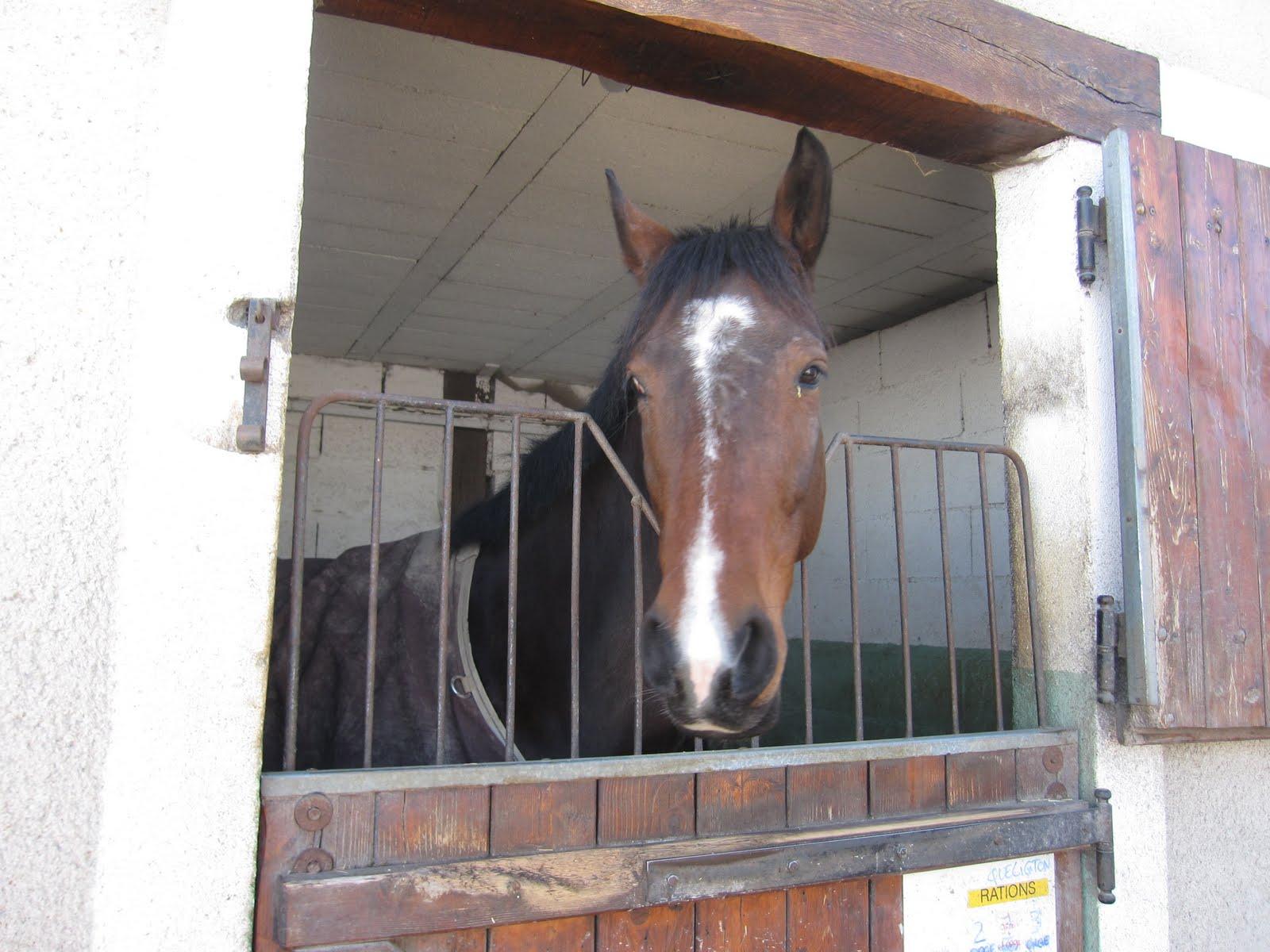 Mon carnet de bord questre salon du cheval le rdv - Salon du cheval a mons ...
